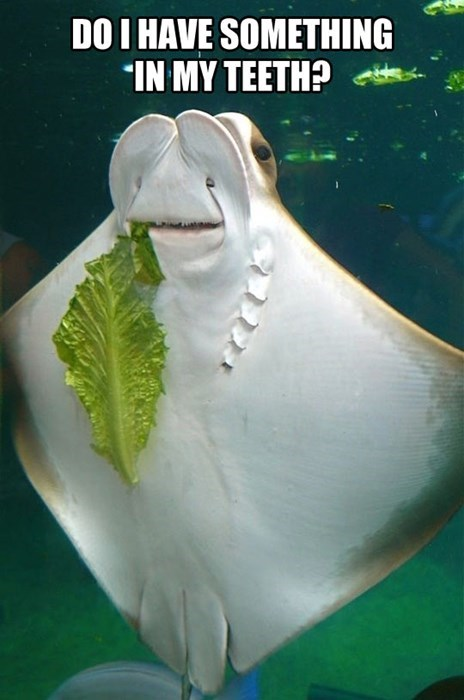 funny,stingray,something in my teeth