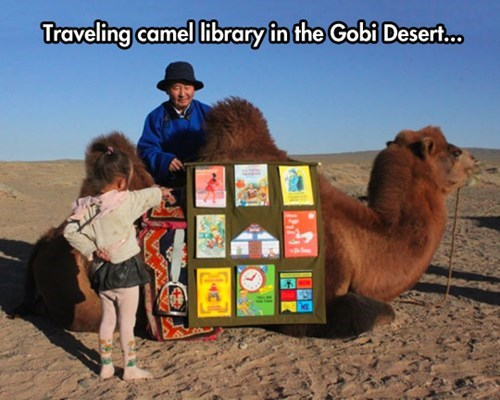 cute books camels desert - 8157341952