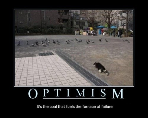 Cats funny optimism - 8157429760