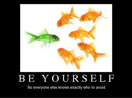 gold fish,individuality,funny