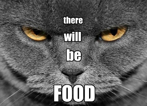 scary food Cats funny - 8157751808