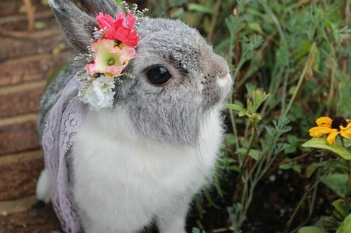 easter,cute,flowers,bunny
