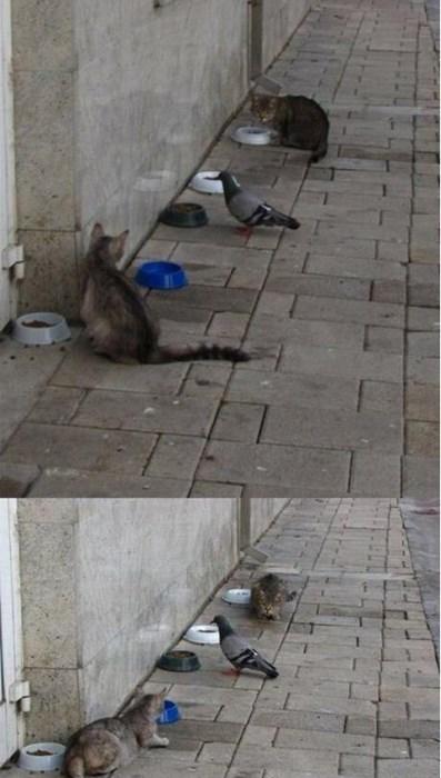 gatos bromas animales fotos - 8158130944