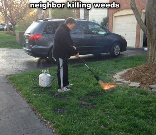 propane Weeds - 8158172928