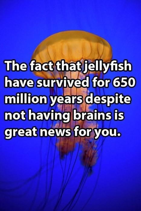 jellyfish sick burn brah - 8158188288