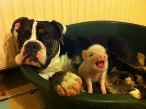 cute dogs kids pig parenting - 8158256128