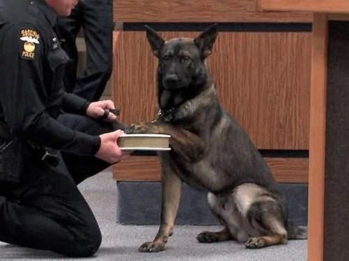 animales perros bromas - 8158282240