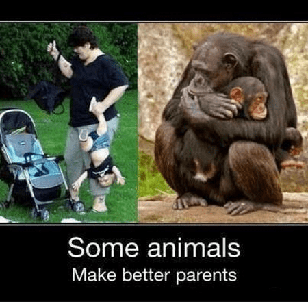 apes funny idiots parents wtf - 8158289408