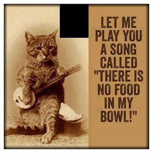 Cats,banjo,hungry,funny,puns,Music