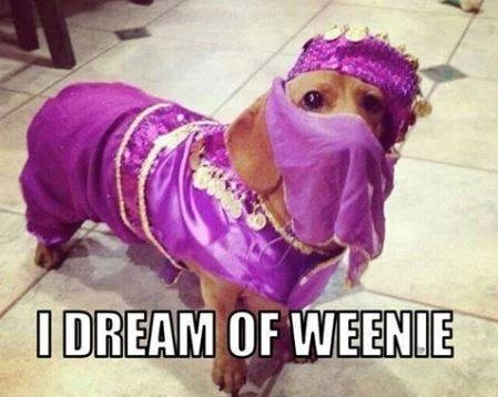 dogs halloween costumes I Dream of Jeannie puns - 8158416384