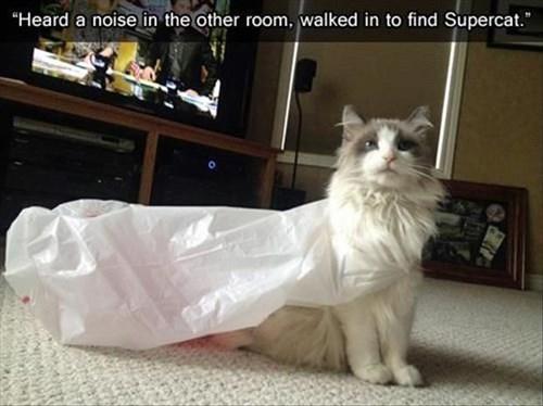 Cats funny superheroes - 8158567680