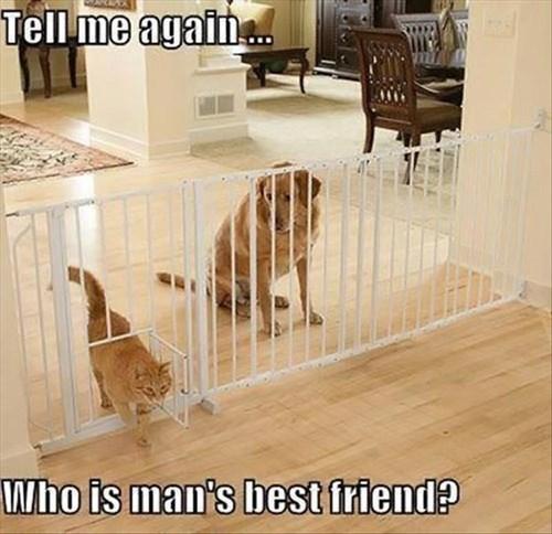 Cats dogs mans-best-friend - 8158569216
