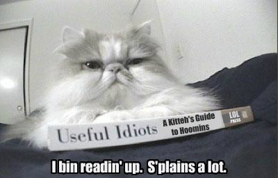 reading Cats trouble - 8158593792