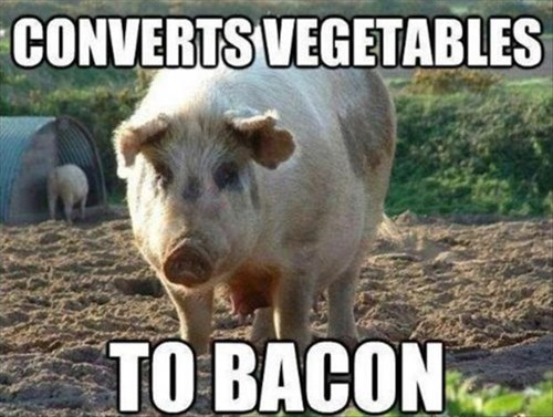 bacon miracles funny pig converter - 8158599936