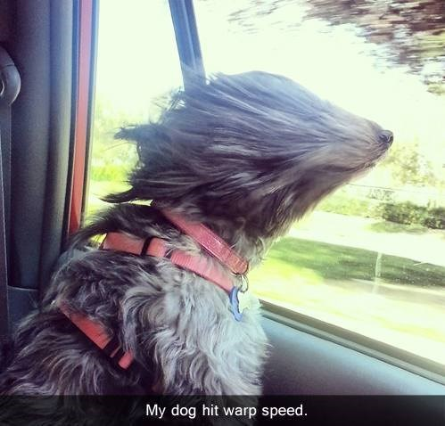 dogs,funny,warp speed