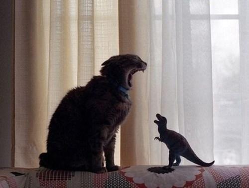 Cats,dinosaurs,funny,roar