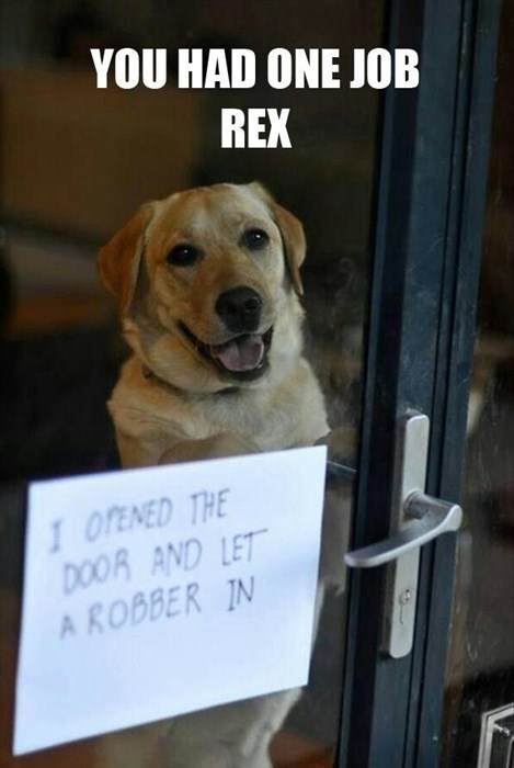 dogs FAIL funny shame robbery you had one job