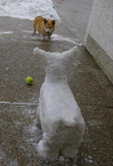 dogs,corgi,fetch,snow,funny,scared
