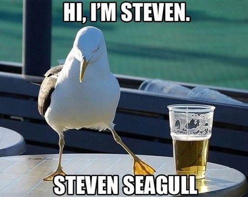 steven seagal,puns,seagull