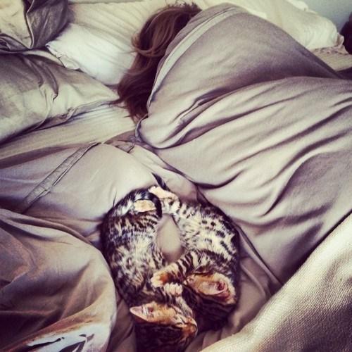 cute snuggle kitten love - 8158717952