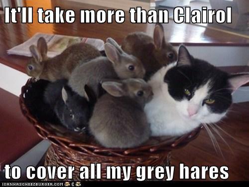 grey hair puns Cats rabbits - 8158902272