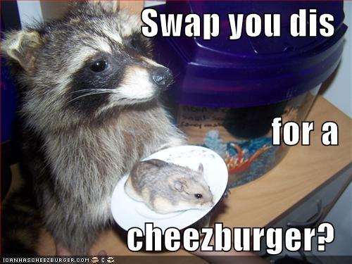 Cheezburger Image 815909632