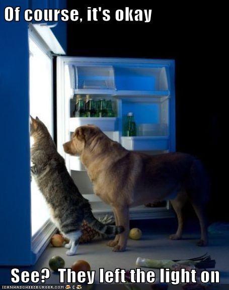 Cats,dogs,mischief,refrigerator