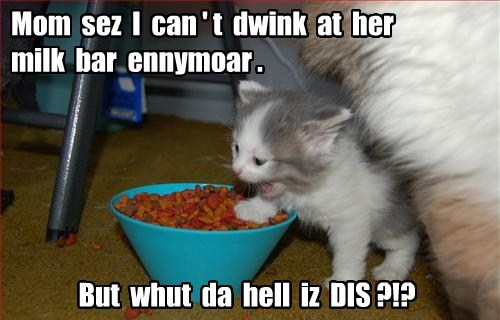 kitten,cute,noms,yuck,Cats