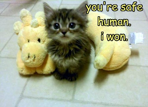 cute kitten protect love - 8159575808