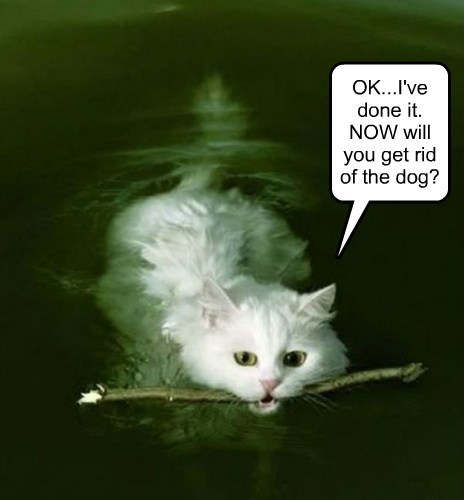 OK...I've done it.  NOW will you get rid of the dog?