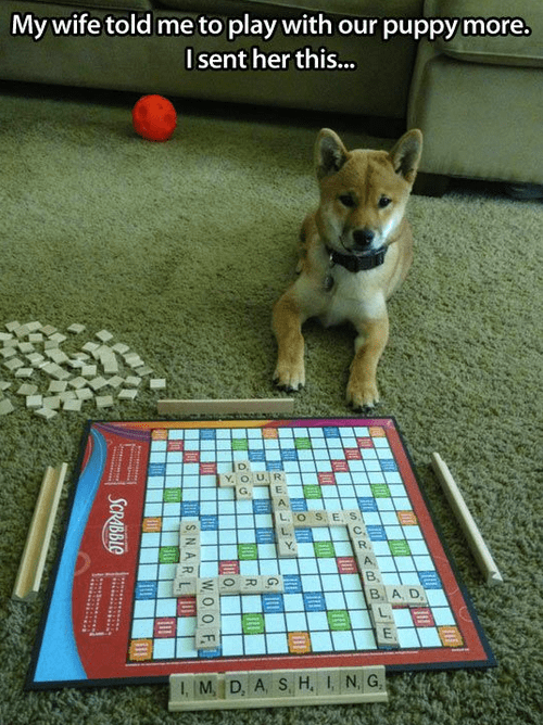 dogs funny games playing scrabble - 8159816704
