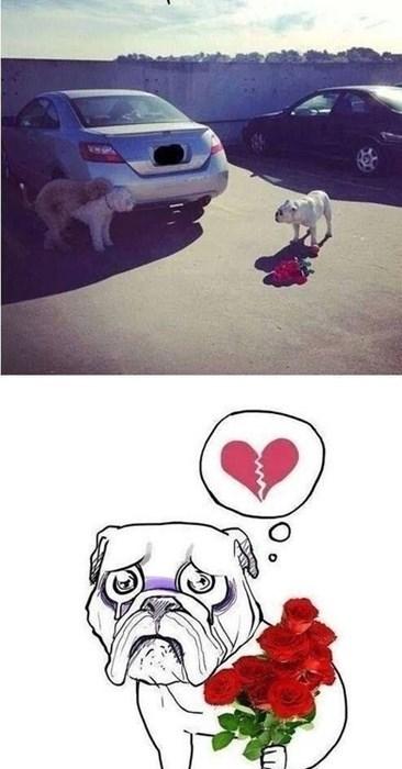 dogs heartbreak love - 8159820288