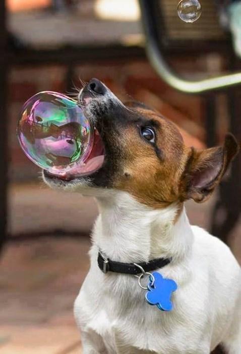 cute dogs bubbles gentle