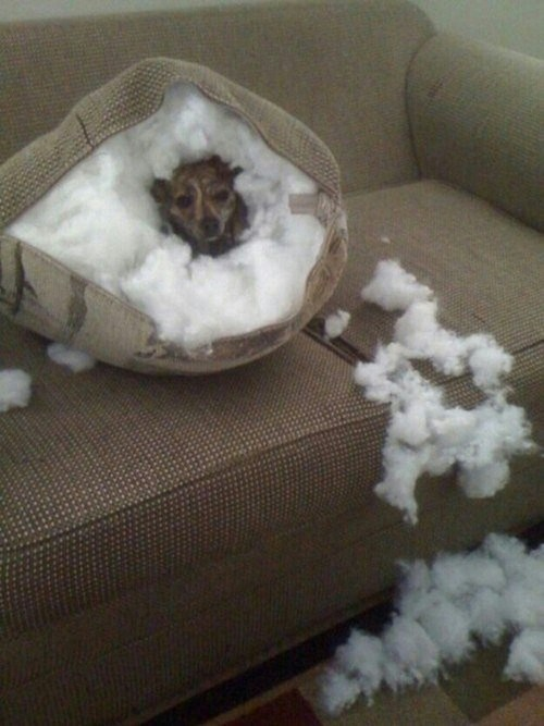 cute dogs destroy funny pillows