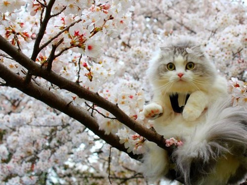 Cats,cute,flowers,spring