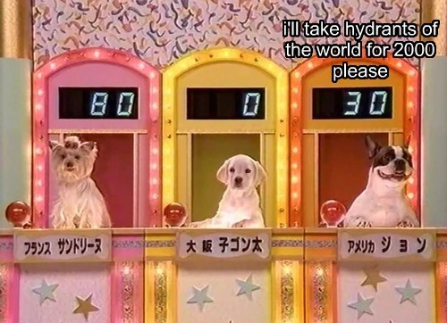 dogs game show funny - 8159916288