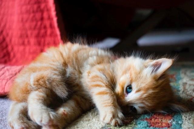 Weekly Dose Of Cute