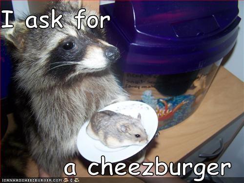 Cheezburger Image 816017152