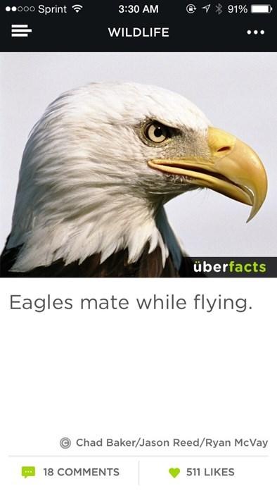 eagles - 8160514816