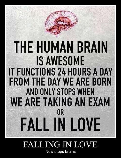 love brain idiots funny - 8160679680