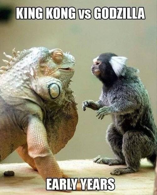 godzilla king kong cute monkey iguana - 8160682240
