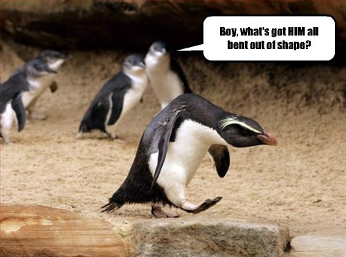penguins,attitude,puns