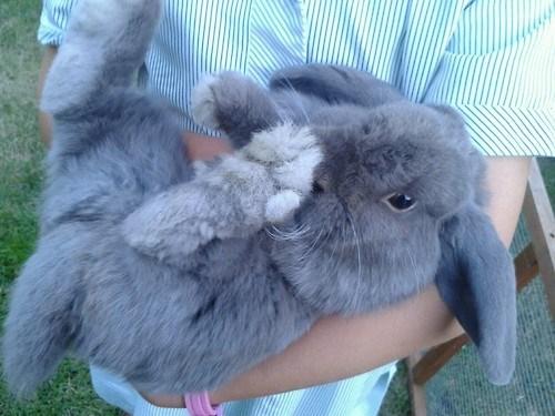 bunnies cute fuzzy rabbits - 8161003776