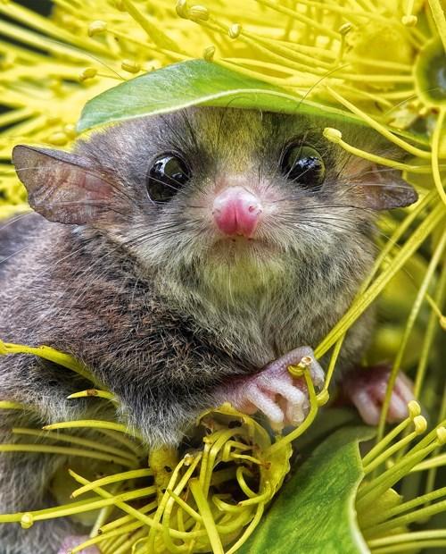 pygmy hats cute flowers - 8161004800