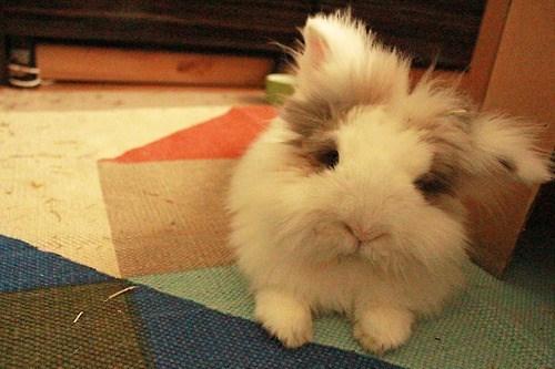 bunnies cute fuzzy kitties - 8161017856
