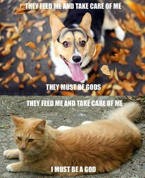 dogs cats vs dogs comparison Cats funny - 8161242368