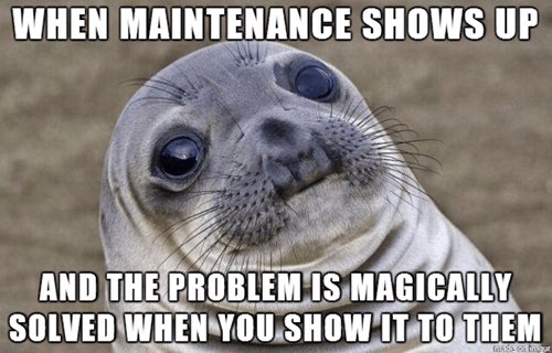 awkward situation seal awkward seal - 8161249024