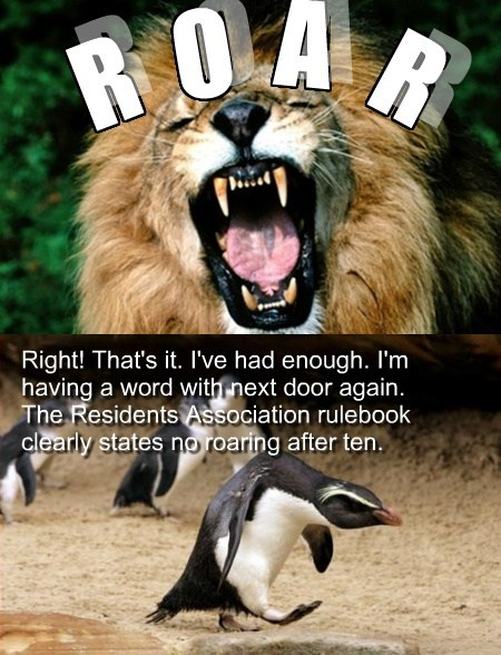 funny lions neighbors penguins - 8161564160