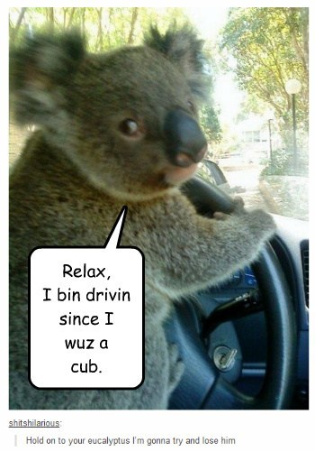 Cleverness Here Relax, I bin drivin since I wuz a cub.