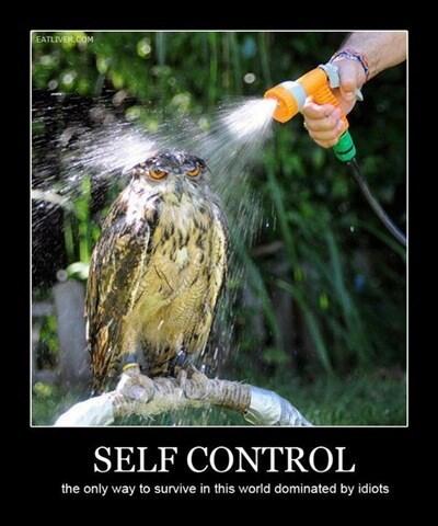 Owl self control idiots funny - 8161923072